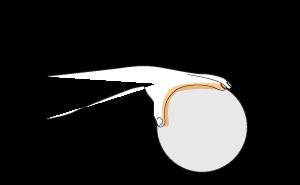 Resultado de imagem para Segurar bola